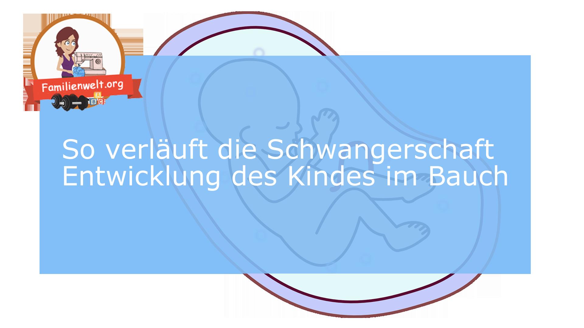 Schwangerschaft Entwicklung Kind Bauch